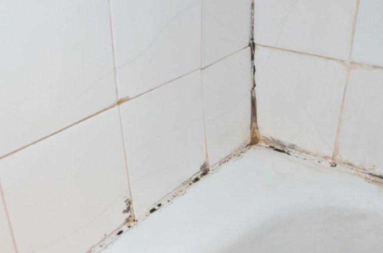 В ванной комнате образовался грибок